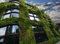 Le mur végétal d'intérieur ou d'extérieur, ce qu'il faut savoir