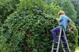 Les avantages de travailler avec un jardinier paysagiste