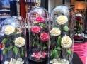 La rose éternelle : la nouvelle tendance déco qui fait fureur