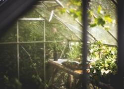 Choisissez une serre de jardin qui se fond dans le décor