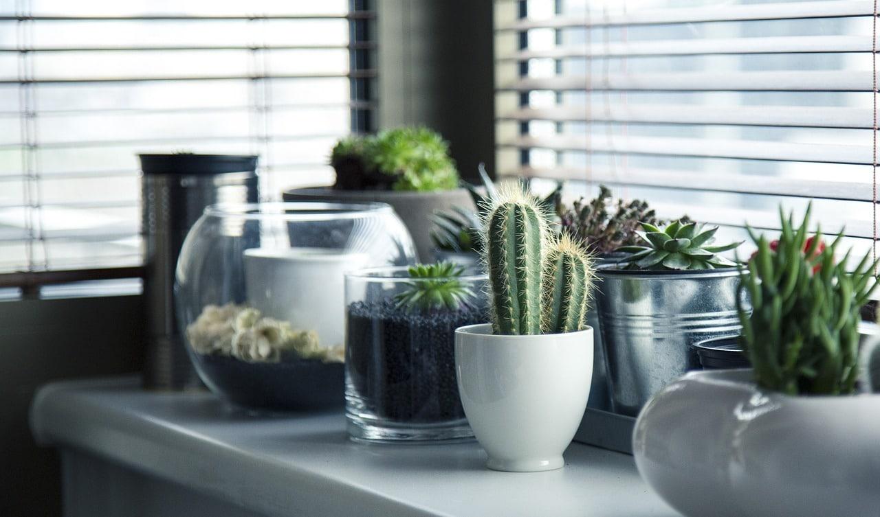 Des plantes protégées de l'hiver dans une veranda