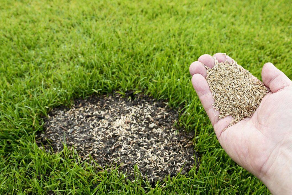 période refaire pelouse