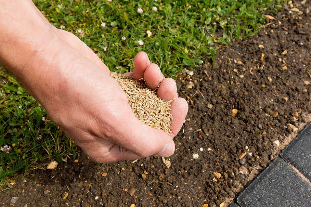 quantité graines semis gazon