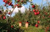 Comment planter des arbres fruitiers dans un verger